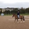 winter-dressage-17thNov19-6
