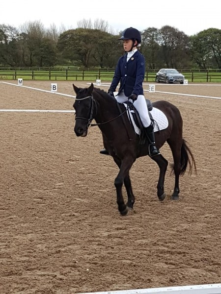 winter-dressage-17thNov19-5