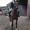 winter-dressage-20thOct19-8